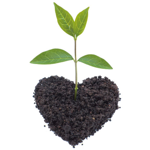 芽は大事、根はもっと大事。